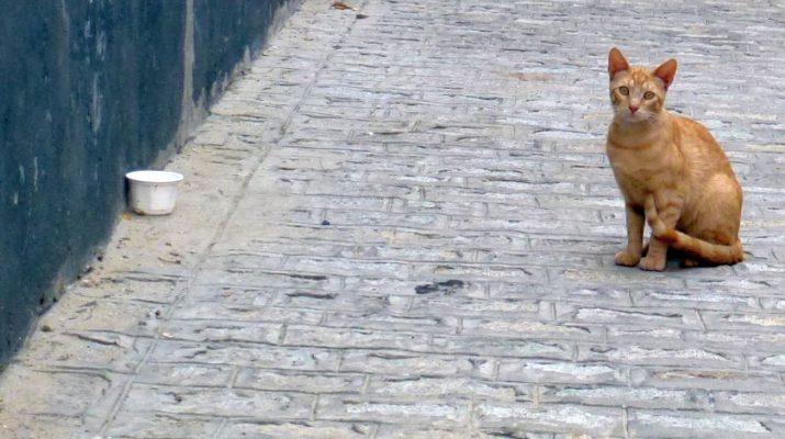 Regalar mascotas